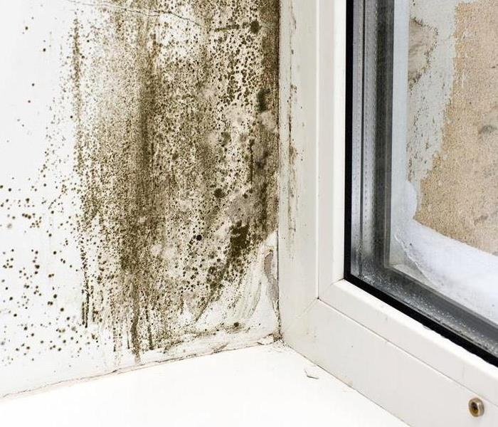Mold Remediation Top tips for preventing mold problems in your Morris/Ottawa home
