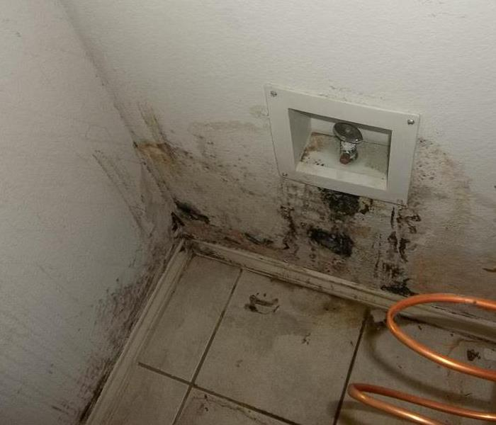 Mold Remediation Mold Removal from Morris/Ottawa, IL Home.